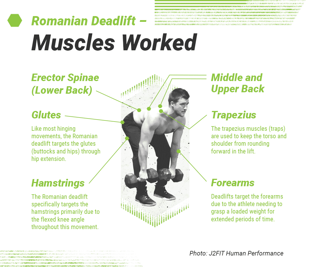 Romanian Deadlift Form Muscles Worked And How To Guide Barbend