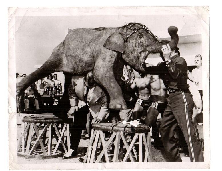 steinborn-elephant