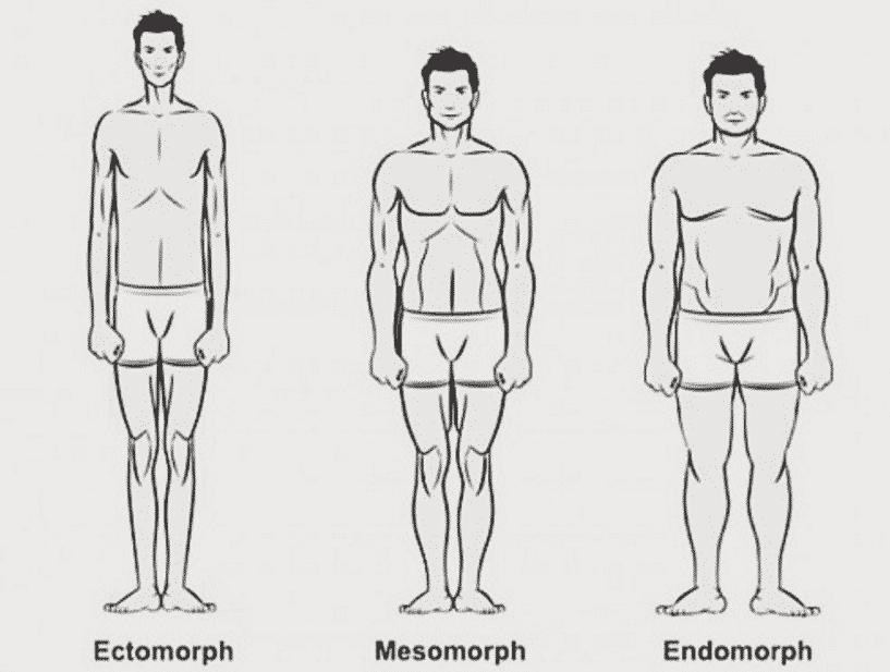 Are the Somatotypes Ectomorph, Mesomorph, and Endomorph