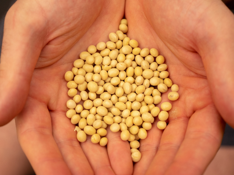 Does Soy Lower Testosterone? What Athletes Need to Know