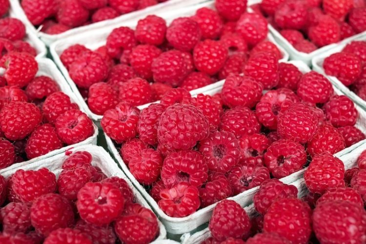 raspberry ketones for fat loss