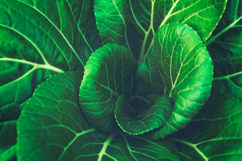 leafy greens free