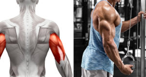 Best Triceps Exercises