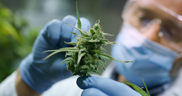 science weed