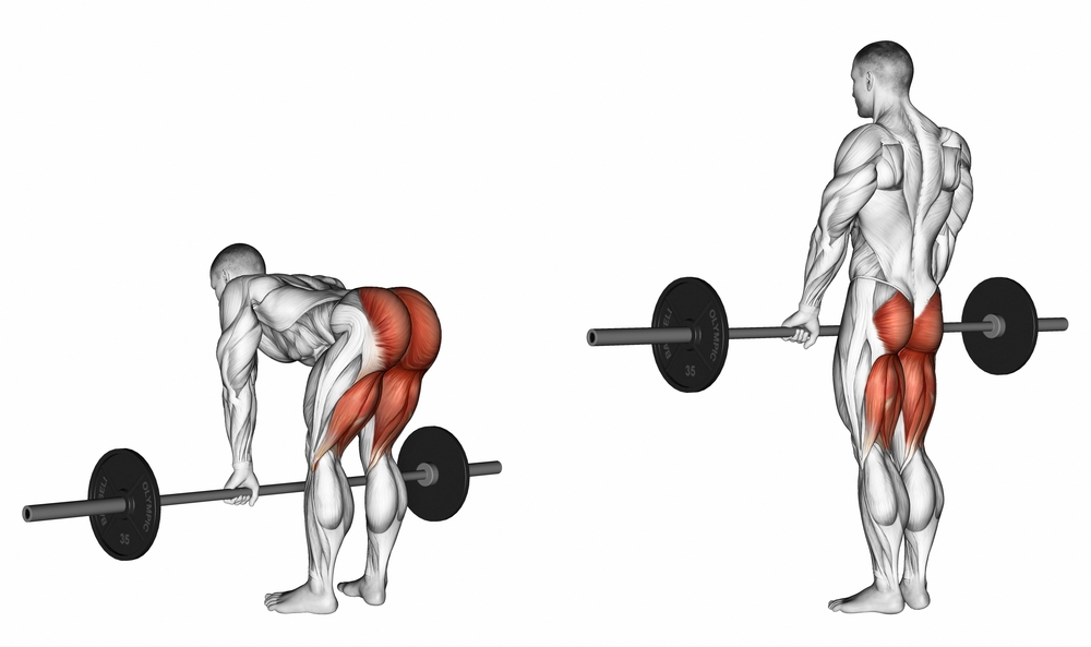 Deadlift Muscles Worked