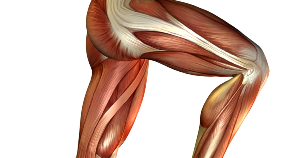 Leg Muscles Squat Variations