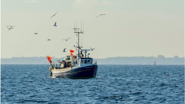 omega-3 friends of the sea