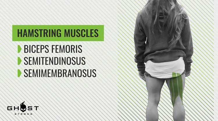Hamstrings Muscles Group
