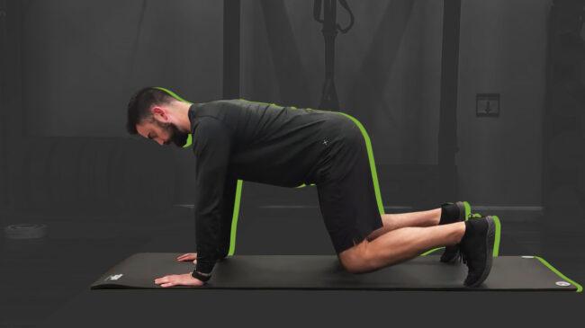 Bear Plank Exercise